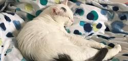 Nouvelle du chat Léon